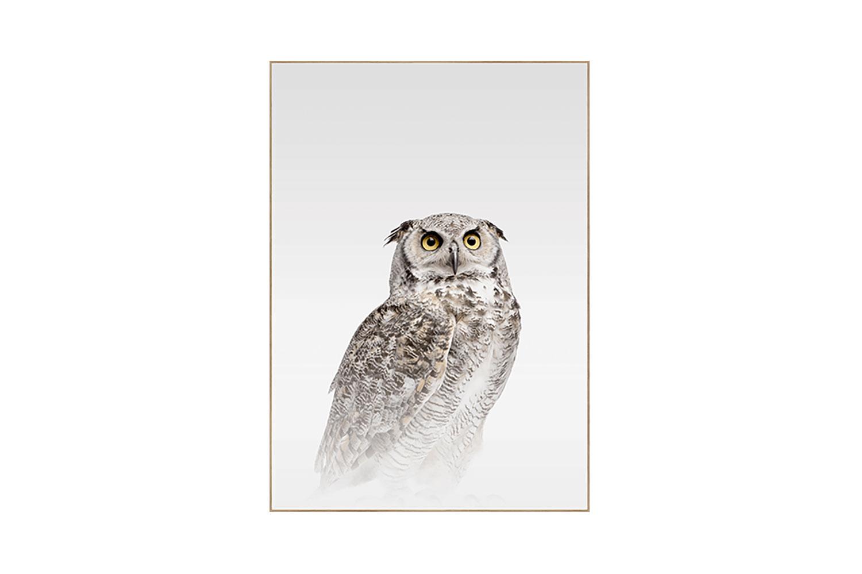 Misty Owl